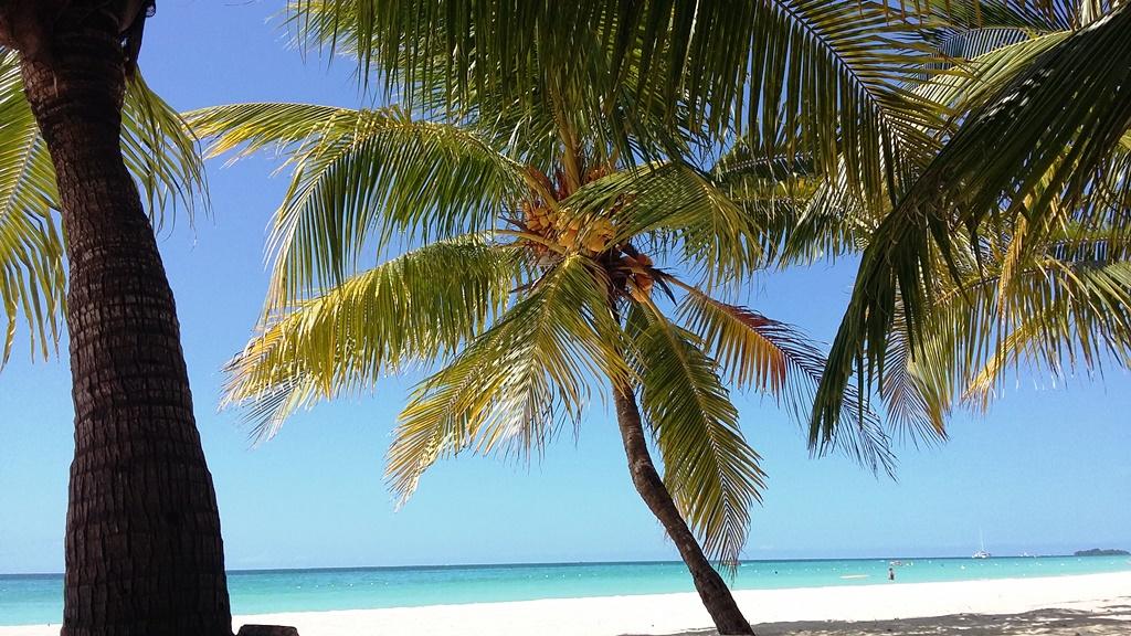 Jamajka 0.jpg