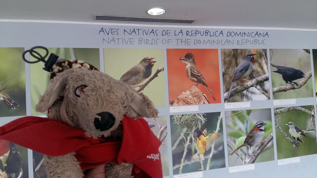 Ptaszki na Dominikanie.jpg