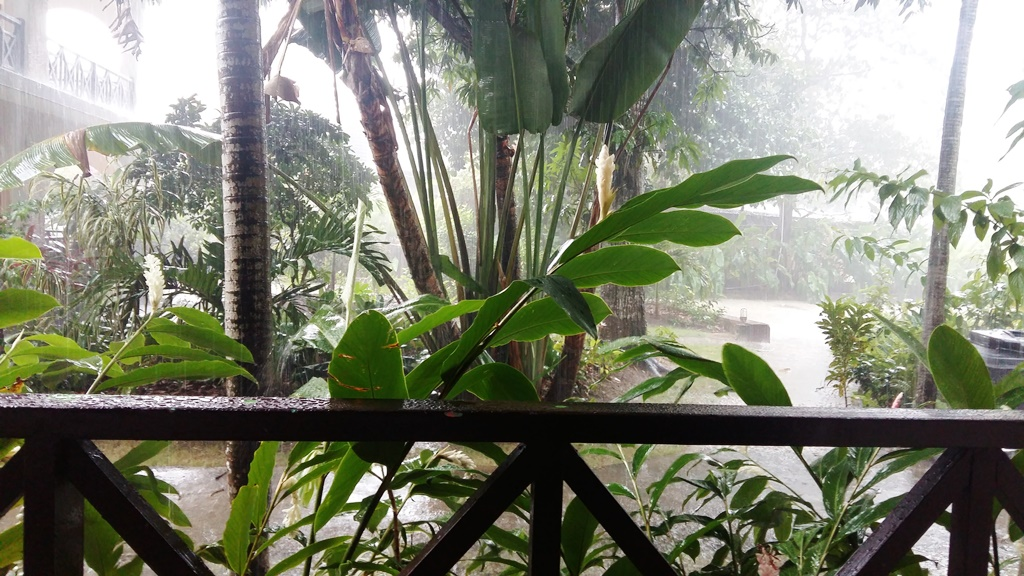 ogrod w deszczu 1.jpg