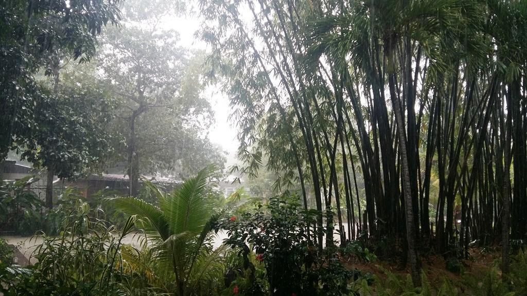 ogrod w deszczu 2.jpg