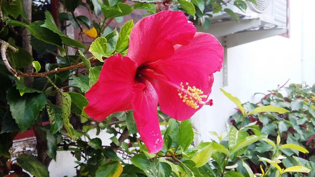 kwiatek dla koligra.jpg