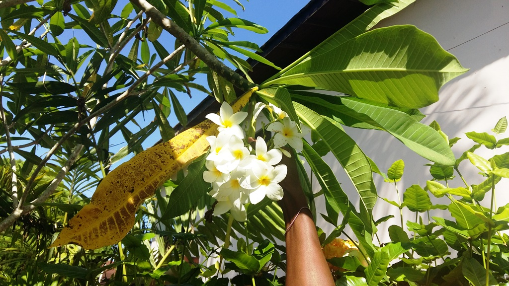 kwiaty palmy.jpg